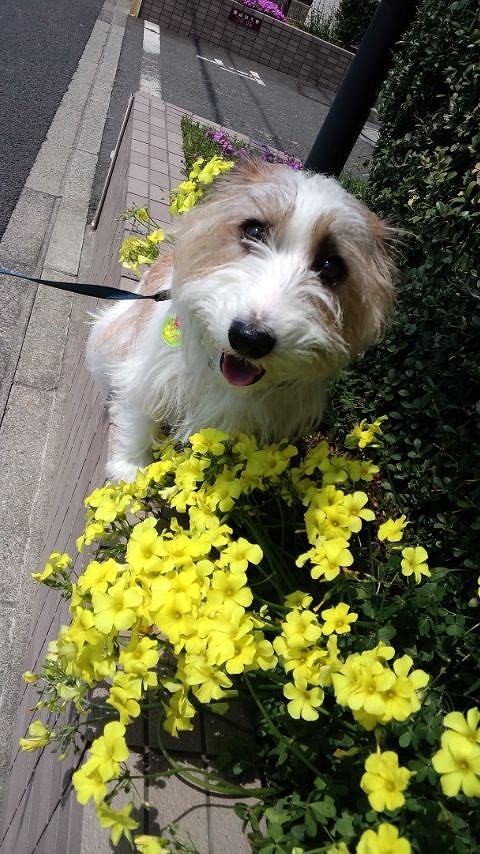 春のお花とゼロ