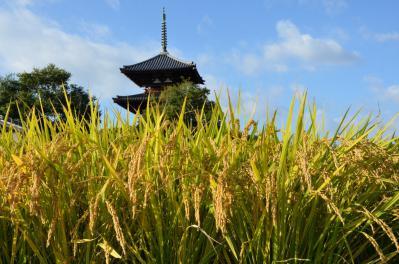 法起寺 (3)