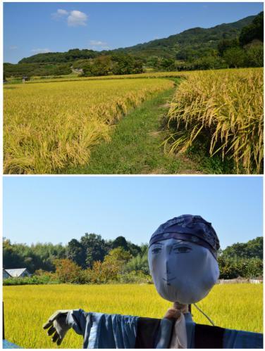 稲田と案山子