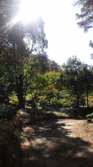 陽楽の森2