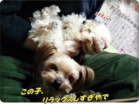 0208こみゅ