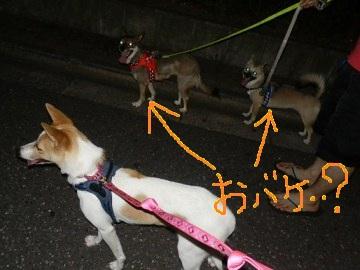 散歩だコメメ (8)