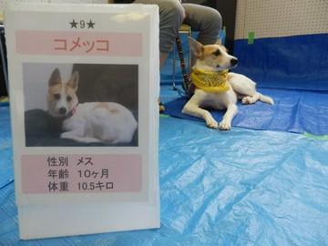犬親会(品川) (14)