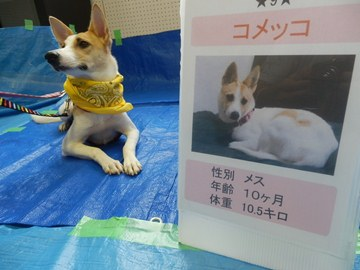 犬親会(品川) (17)