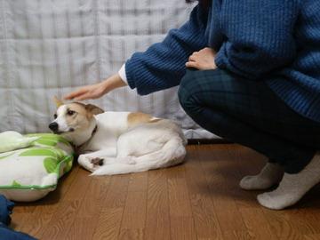 お見合い♥コメメ (1)