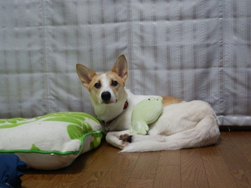 お見合い♥コメメ (4)