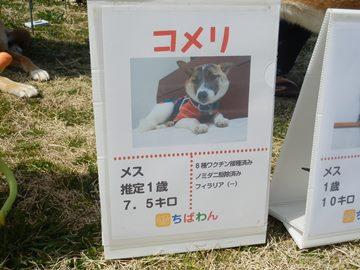 コメリ犬親会01 (1)