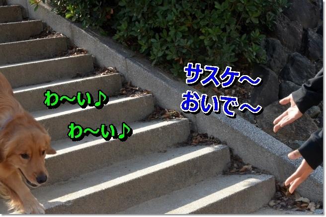 DSC_4334.jpg