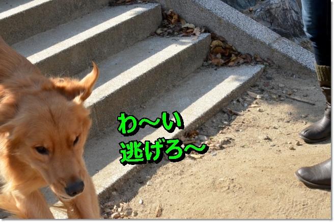 DSC_4336_20140207111648f02.jpg