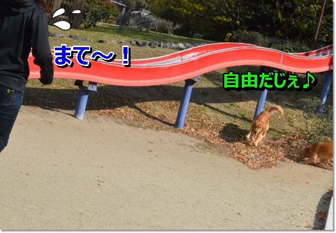 DSC_4340.jpg