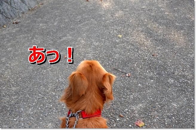 DSC_4671.jpg