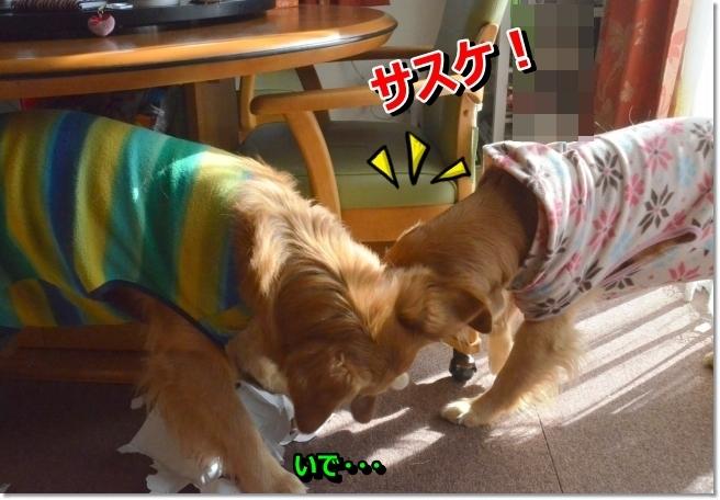 DSC_8709_201402171834506b6.jpg