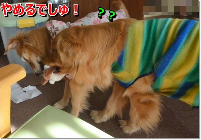 DSC_8711_20140217183505456.jpg