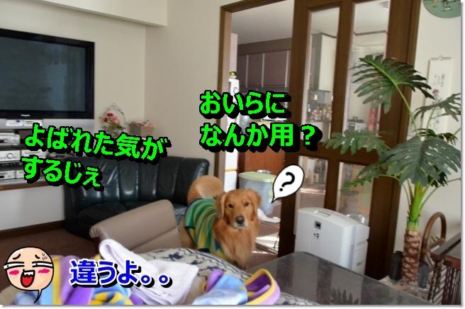 DSC_8734_2014021718372103f.jpg