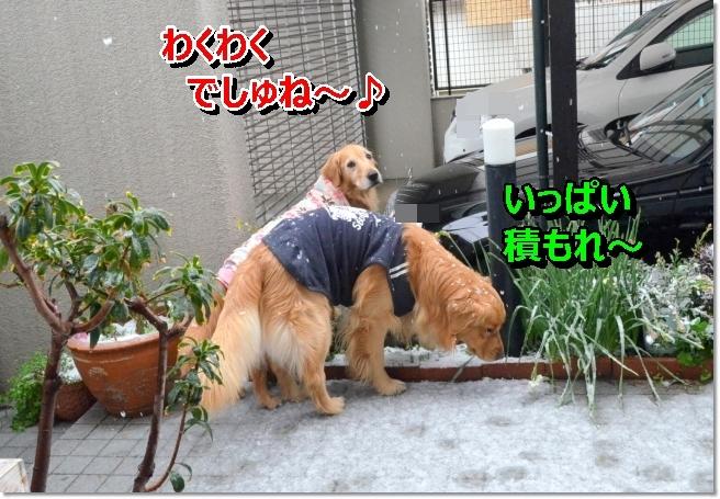 DSC_9191.jpg