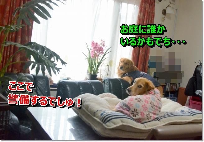 DSC_9247.jpg