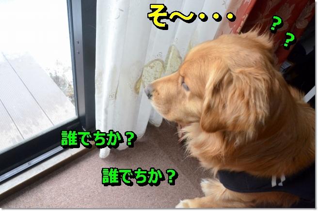 DSC_9251_20140210125821abd.jpg
