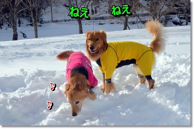 DSC_9302.jpg