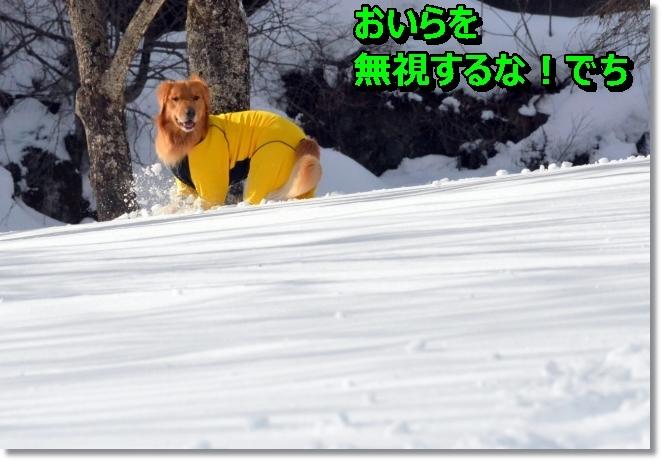 DSC_9325.jpg