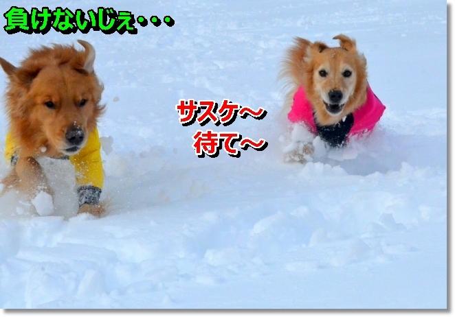 DSC_9588_20140215085810f1a.jpg