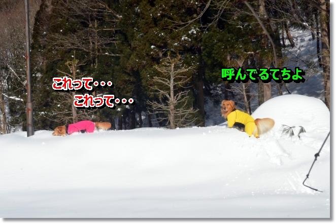 DSC_9624.jpg