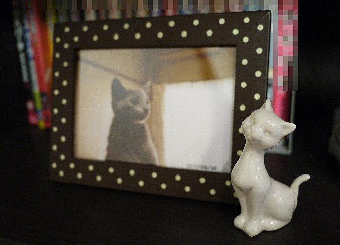 猫チャンコラボ