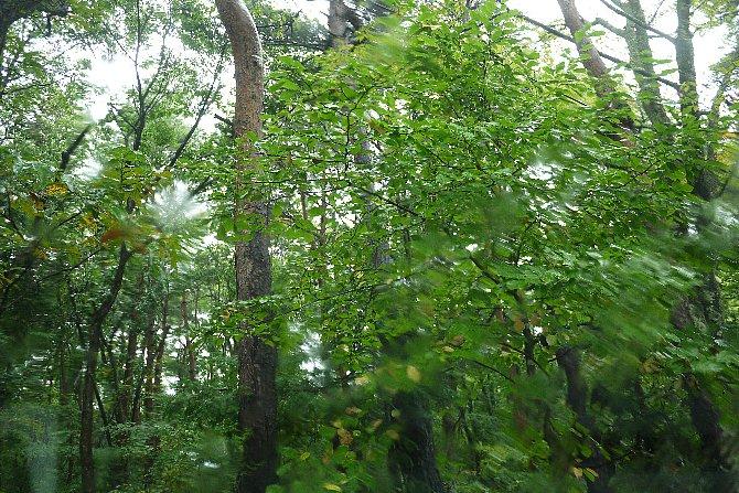 雨の中の緑