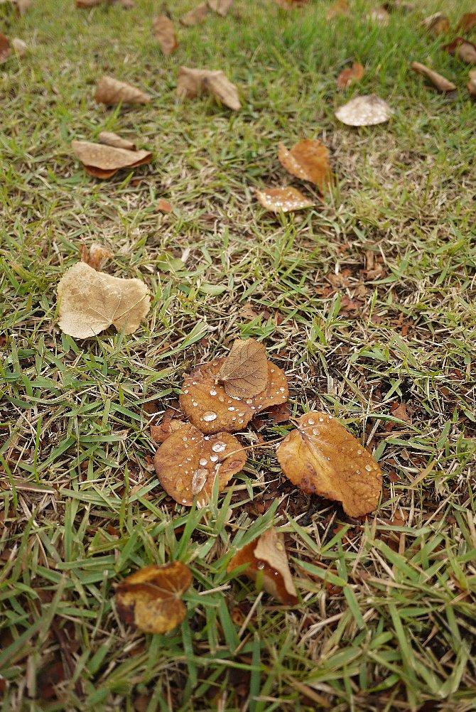 朝露に濡れる落ち葉