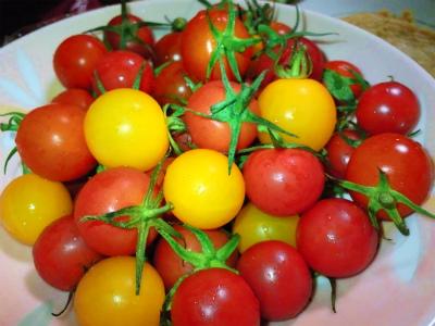 色とりどりトマト