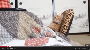 こたつの中の猫taro_140327kotatu03