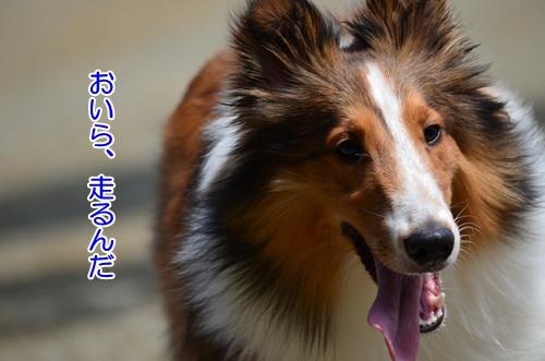 DSC_0275a.jpg