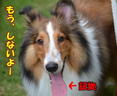 DSC_0435a.jpg