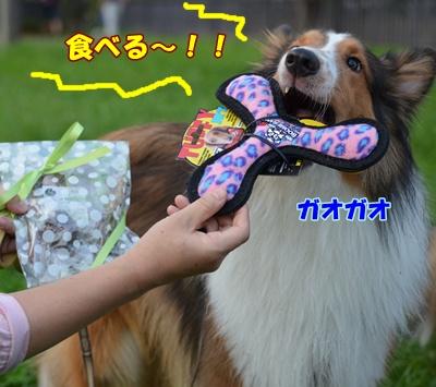 DSC_0996a.jpg