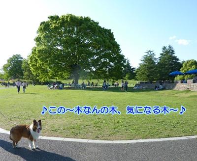 P1020751a.jpg