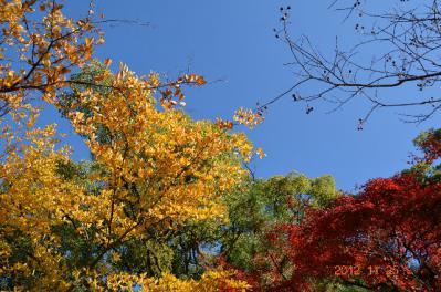 20121124_御所-5