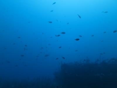 02-17 青いウマノセ