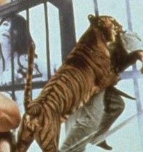 虎に襲われる人
