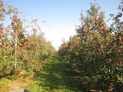 りんご部隊