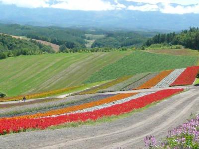 色彩の丘写真