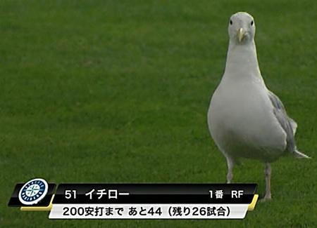 ichiro-pigeon.jpg