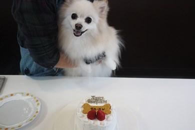 ちろしケーキ