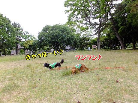 DSCF2383_20130711094631.jpg