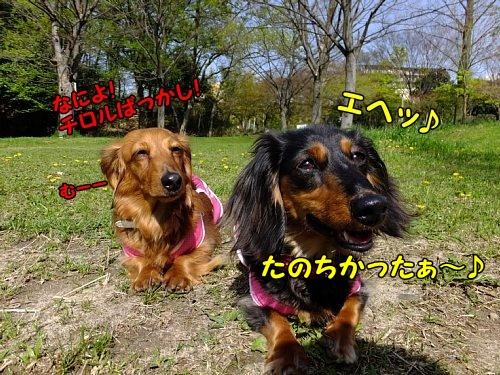 DSCF6841_20130408163826.jpg