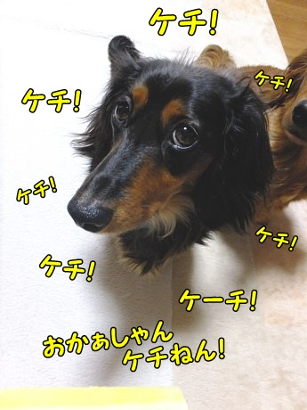 DSCF8546.jpg