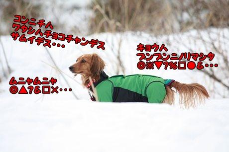 IMG_2102_20130207151333.jpg