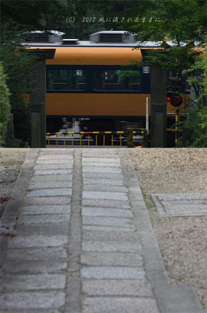 2012年 奈良・久米寺 アジサイ11