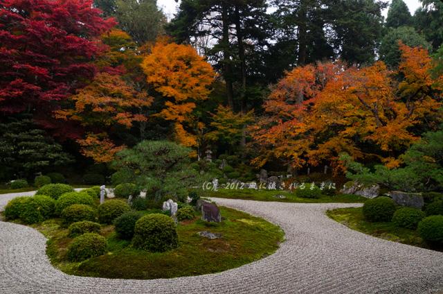 2012年 京都・曼殊院門跡の庭園の紅葉1
