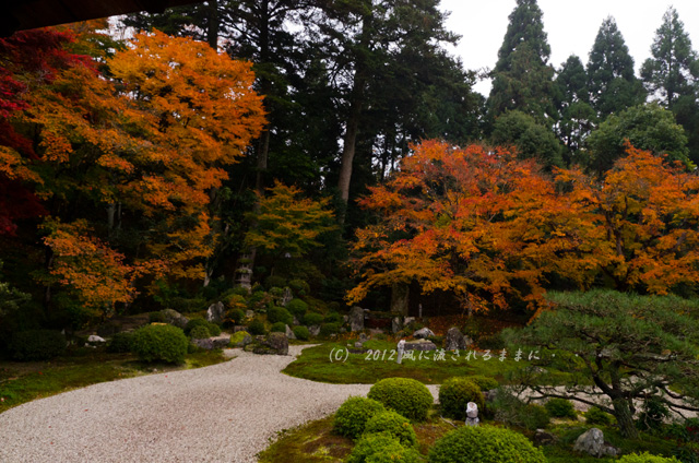 2012年 京都・曼殊院門跡の庭園の紅葉3