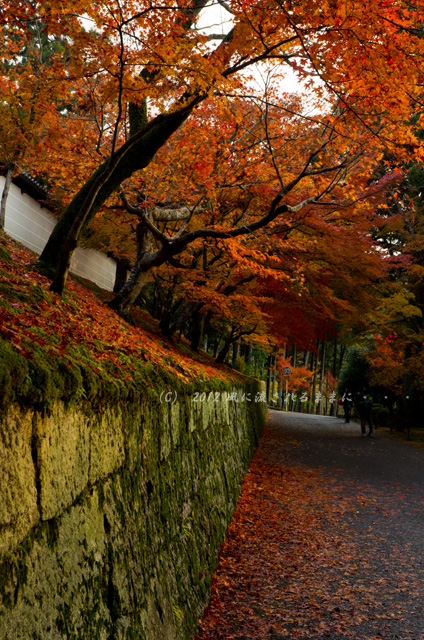 京都・曼殊院門跡の紅葉2