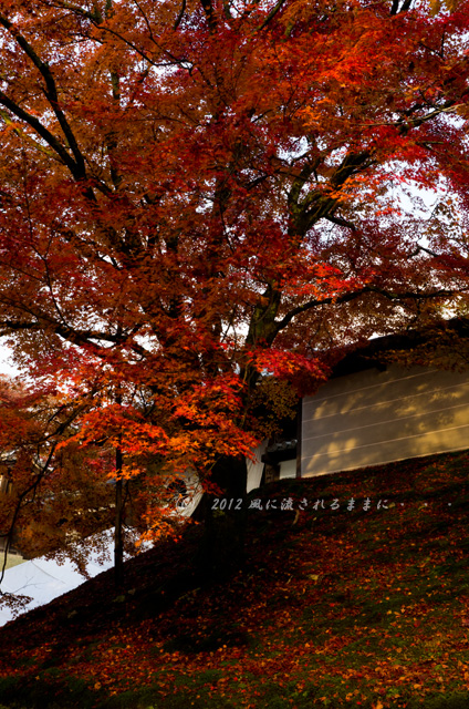 京都・曼殊院門跡の紅葉3